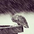 坚强的小小鸟
