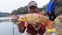 [游钓]红鲤鱼鸿运当头