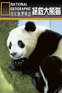 寰宇地理之拯救大熊猫