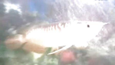 金龙鱼07年12月30日
