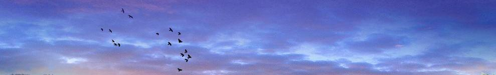 紫蓝冰瞳00478888 banner
