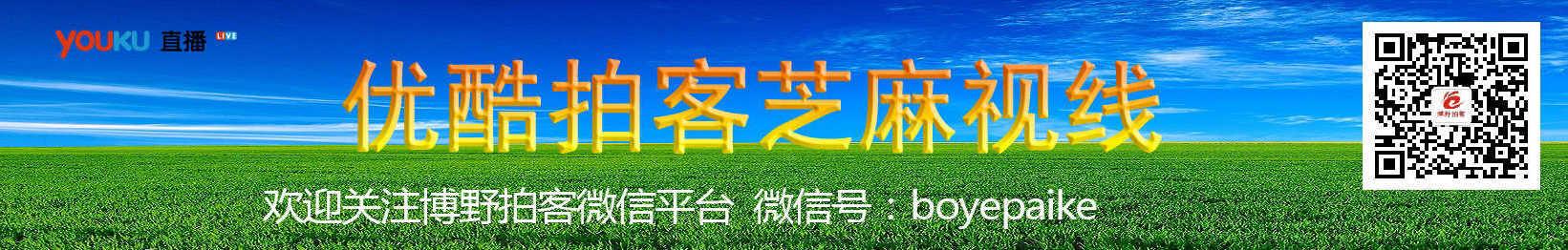 芝麻视线 banner