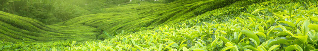 茶频道 banner