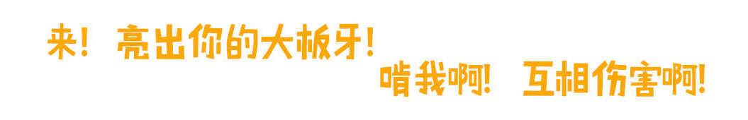 啃芝士 banner