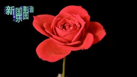 6环绕纯音乐《浪子的心情-杯中影-相思梦》+四季鲜花欣赏