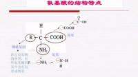 生物微課視頻《氨基酸與蛋白質》