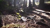 視頻: 張家界黃石寨極限自行車速降